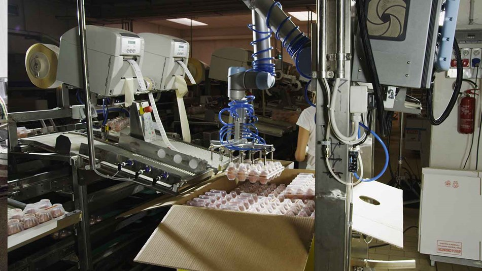 cobots-used-for-egg-packaging-cascina-italy