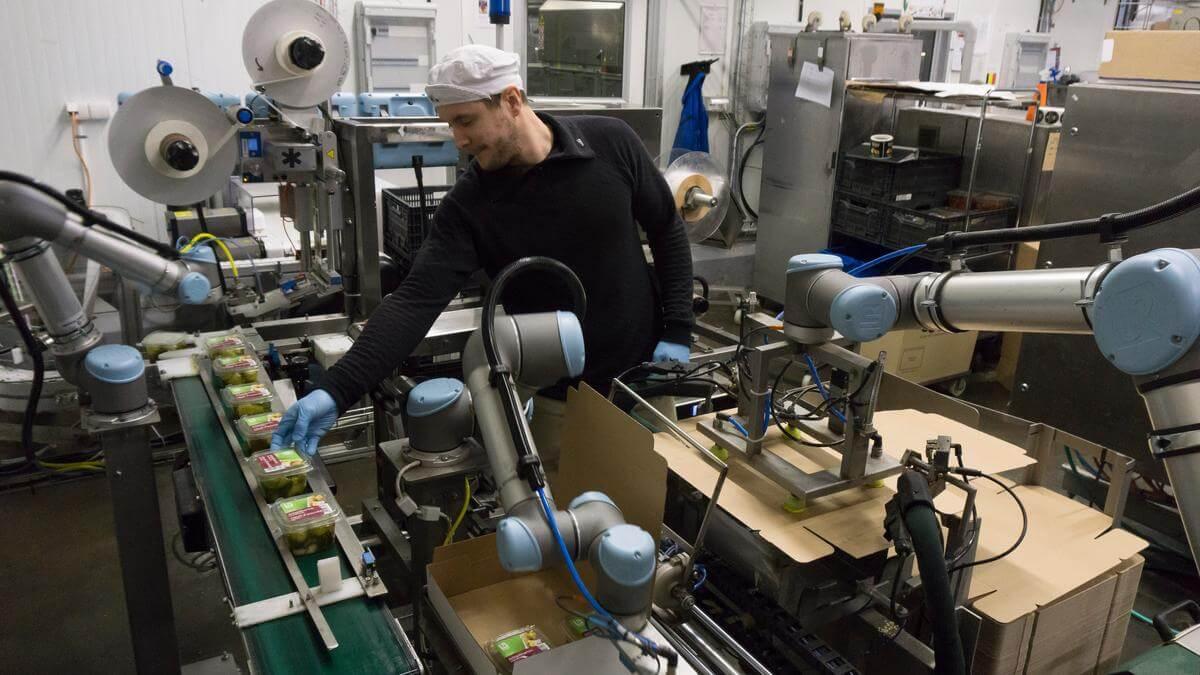 robotique agroalimentaire